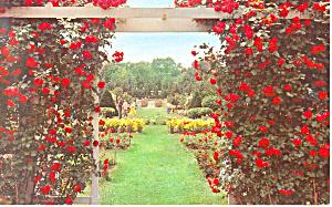 Jackson Perkins Rose Garden Newark NY  Postcard p17253 (Image1)