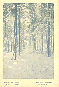 Under the Pines Walter L.Palmer Postcard (Image1)