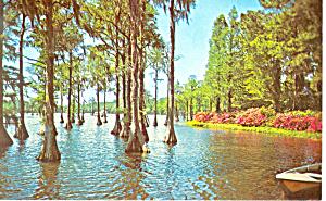 Greenfield Lake Wilmington NC   Postcard p17512 (Image1)