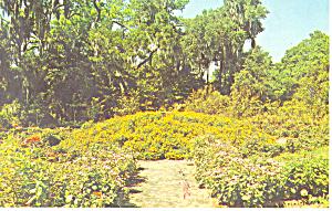 Floral Mound Orton Plantation NC Postcard p17564 (Image1)