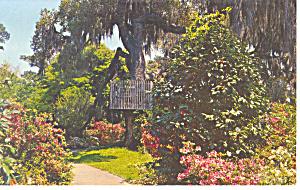 Azalea Paths Orton Plantation NC Postcard p17566 (Image1)