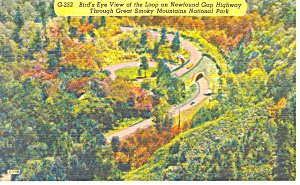 Newfound Gap Highway,Smoky Mountains NC Postcard (Image1)