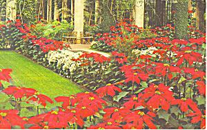 Longwood Gardens Kennett Square PA Postcard p17724 (Image1)