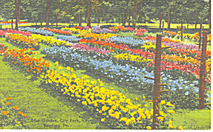 Rose Garden City Park Reading Pa Postcard P17777