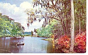Middleton Place Gardens SC  Postcard p17886 1967 (Image1)