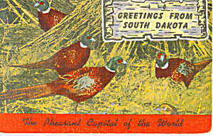 Greetings From SD Pheasant Capital of World  Postcard p17929 (Image1)