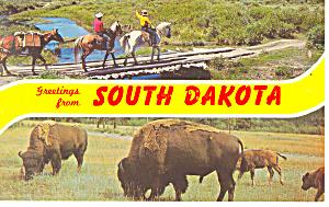Greetings From SD Buffalos  Postcard p17931 (Image1)