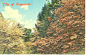 City of Dogwoods Knoxville TN Postcard p17957 (Image1)