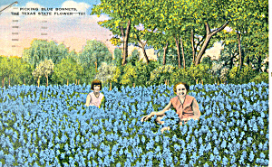 Picking Bluebonnets-State Flower of TX Postcard (Image1)