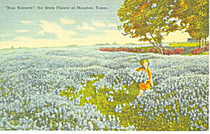 Bluebonnets State Flower of Texas Postcard p18059 (Image1)