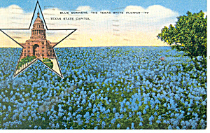 Bluebonnets-State Flower of TX Postcard 1944 (Image1)