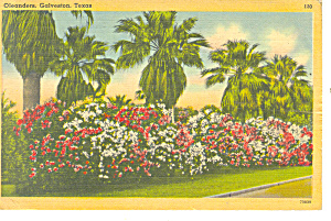 Oleanders, Galveston,Texas Postcard 1942 (Image1)
