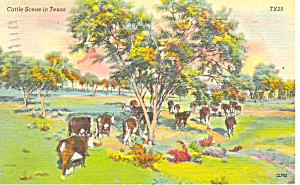 Cattle Scene inTexas Postcard 1945 (Image1)