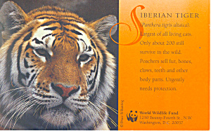 Siberian Tiger Postcard p18126 (Image1)