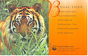 Bengal Tiger Postcard p18127 (Image1)
