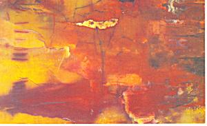 Petrified Wood Postcard p18129 (Image1)