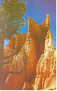 Bryce Canyon National Park UT Postcard (Image1)