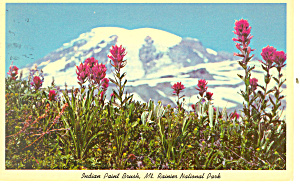 Indian Paint Brush, Mt Rainier WA Postcard 1983 (Image1)