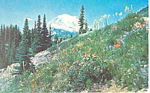 Mt Rainier Wa Postcard P18415 1965