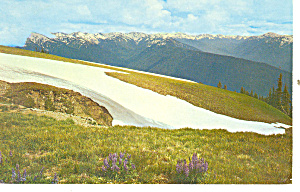 Summer, Olympic National Park,WA Postcard 1985 (Image1)