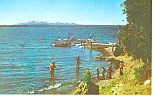 Yellowstone Lake Yellowstone National Park WY Postcard p18462 (Image1)