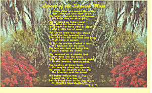 Legend Of The Spanish Moss Postcard (Image1)