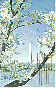 Washington Monument, Washington DC Postcard 1961 (Image1)