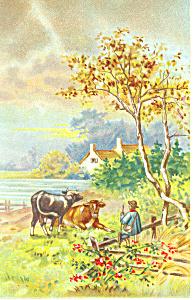 Pastorial Scene Postcard 1907 (Image1)