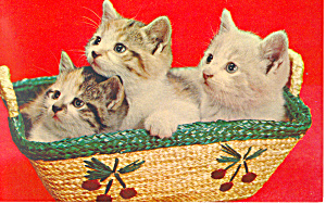 Three Adorable Kittens In A Basket Postcard P18753