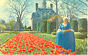 Palace Gardens,Williamsburg, VA Postcard (Image1)