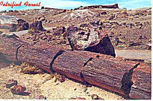 Petrified Forest National Park, Arizona (Image1)