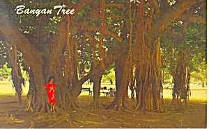 Banyan Tree Lahaina Maui Hawaii p18836 (Image1)