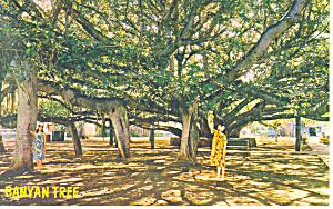 Banyan Tree Lahaina Maui Hawaii p18837 (Image1)