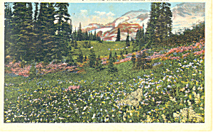 Henry's Hunting Ground,Mt Rainier,Washington (Image1)