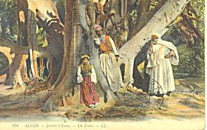 Algeria Jardin d Essai Un Ficus p18998 (Image1)