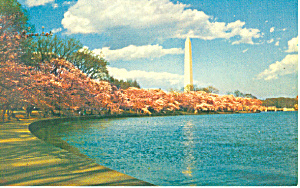 Washington Monument, Washington DC Postcard (Image1)