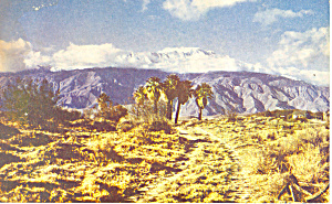Seven Palms, California Postcard (Image1)