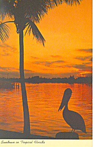 Palm Silhouette in Tropical Florida Postcard p19313 (Image1)