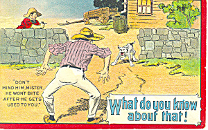 Comical Attack Dog Postcard p19349 (Image1)