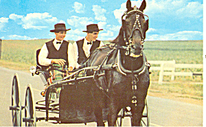 Amish Young Men With Amish Buggy Postcard P19370