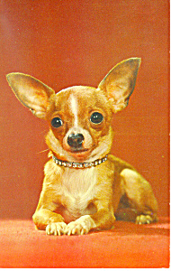 Cute Dog Postcard (Image1)