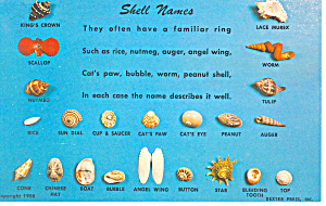 Shell Names Postcard P19454