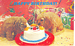 Happy Birthday Puppies and Cake Postcard p19489 (Image1)
