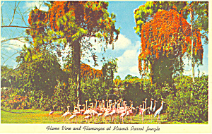 Flame Vine & Flamingos,Parrot Jungle, Miami,Florida (Image1)