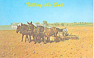 Amish Mules Tilling the Soil Postcard p19994 (Image1)