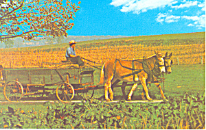 Amish Farmer On Farm Wagon Postcard P21102
