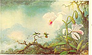 Humming Birds and Orchids Martin J Heade Postcard p21142 (Image1)
