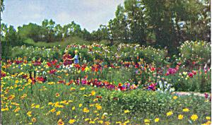 The Garden of The Inn Rancho Santa Fe  California p21604 (Image1)