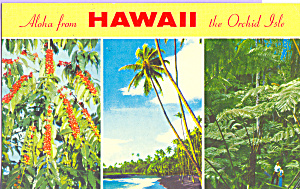 Views of Hawaii Postcard p21620 (Image1)
