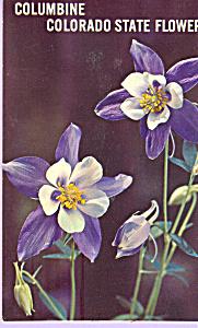 Rocky Mountain Columbine Colorado State Flower   p21756 (Image1)